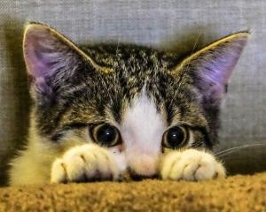 kitten-2558459_1920